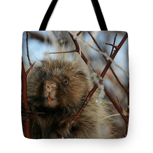 Porcupine And Berries Tote Bag by Marty Fancy