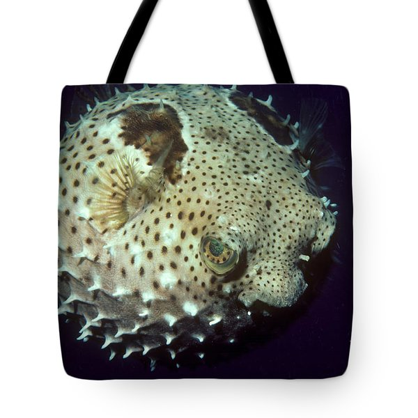 Porcupinefish Tote Bag by Gregory G. Dimijian