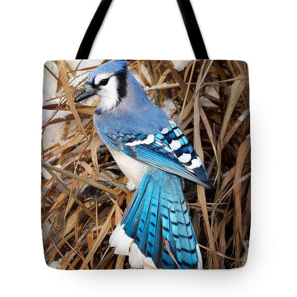 Portrait Of A Blue Jay Square Tote Bag by Bill Wakeley