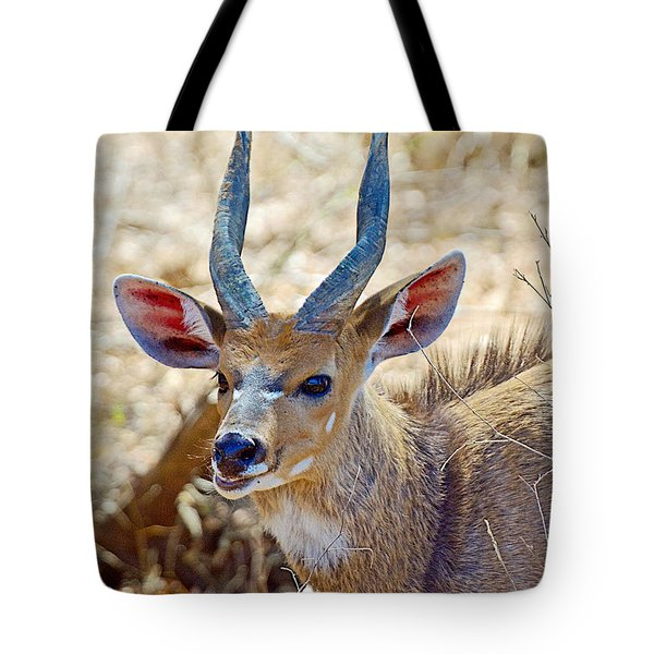 Portrait Of A Bushbuck In Kruger National Park-south Africa  Tote Bag