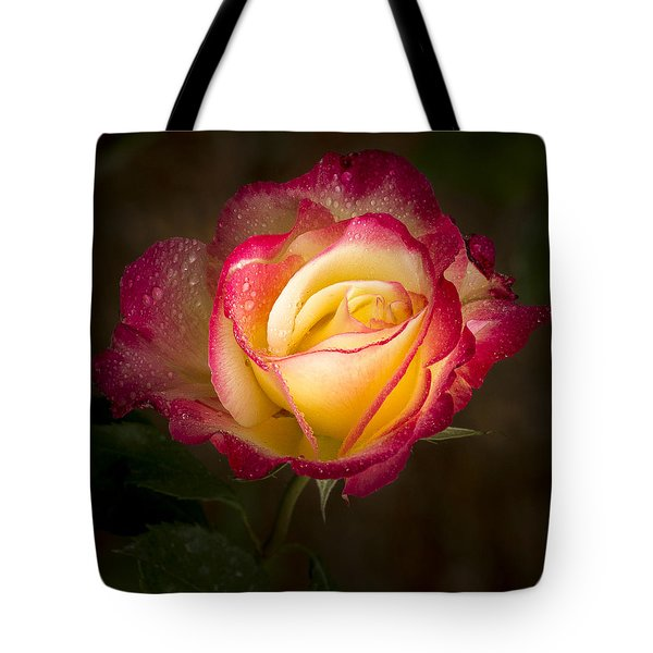 Portrait Of A Double Delight Rose Tote Bag