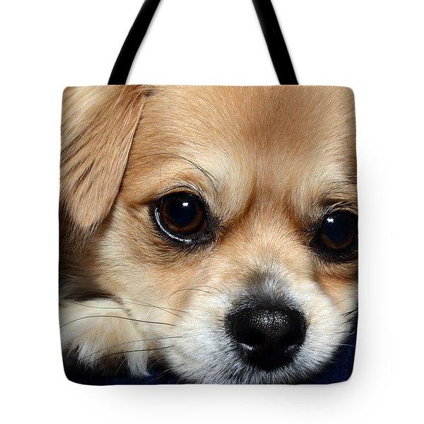 Portrait Of A Pup Tote Bag by Lisa Knechtel