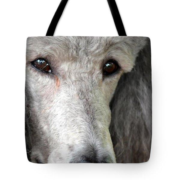 Portrait Of A Silver Poodle Tote Bag