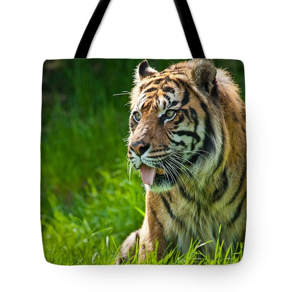 Tote Bag featuring the photograph Portrait Of A Sumatran Tiger by Jeff Goulden