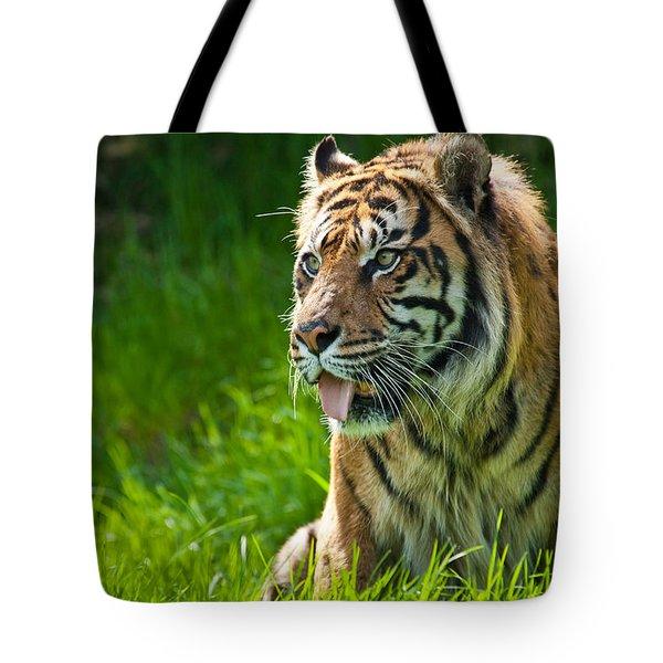 Portrait Of A Sumatran Tiger Tote Bag by Jeff Goulden