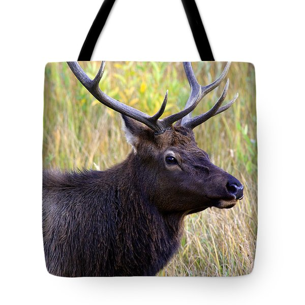 Portrait Of An Elk Tote Bag by Karen Lee Ensley