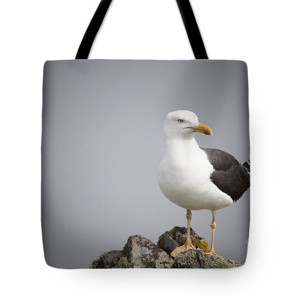 Posed Gull Tote Bag by Anne Gilbert