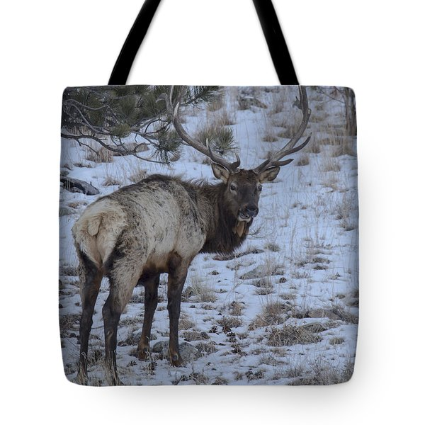 Elk Bull In Wind Cave National Park Tote Bag