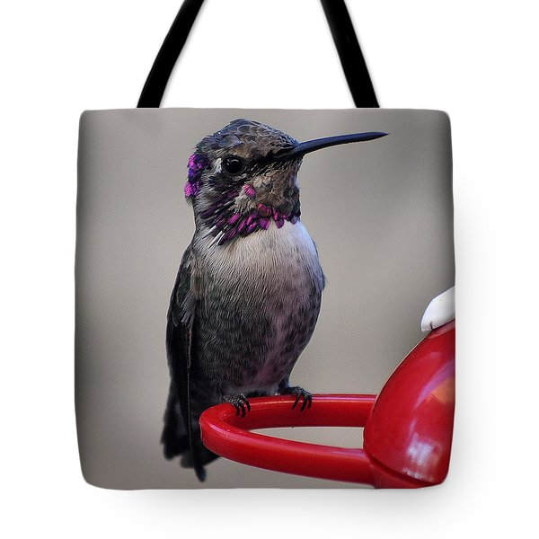 Tote Bag featuring the photograph Posing Juvenile Hummingbird Anna by Jay Milo