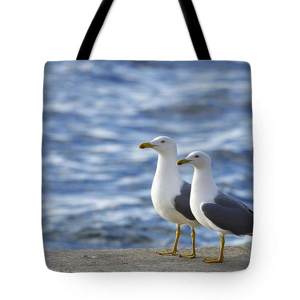 Posing Seagulls Tote Bag
