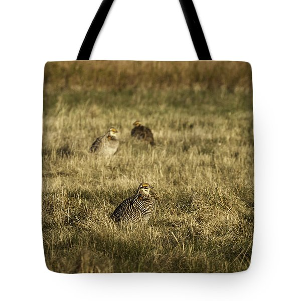 Prairie Chickens After The Boom Tote Bag by Thomas Young