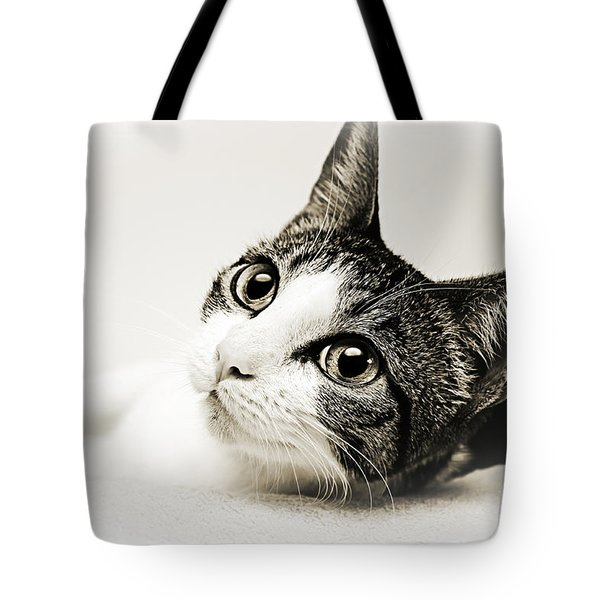 Precious Kitty Tote Bag