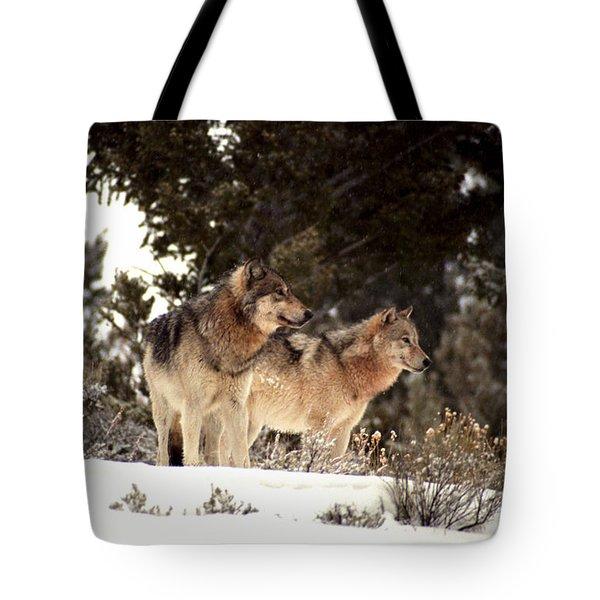 Predators Tote Bag by Sharon Elliott