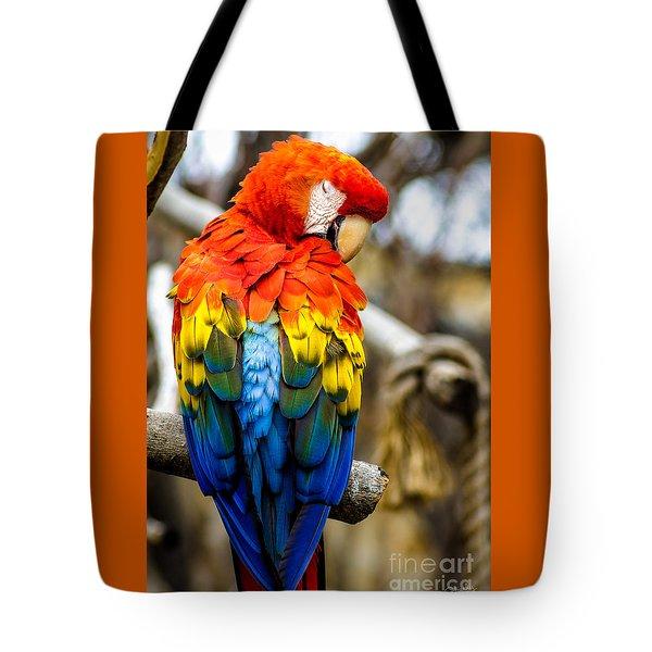 Preening Scarlet Macaw Tote Bag
