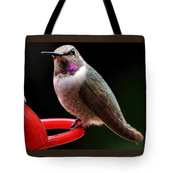 Tote Bag featuring the photograph Pregnant Female Caliope With Purple Throat by Jay Milo