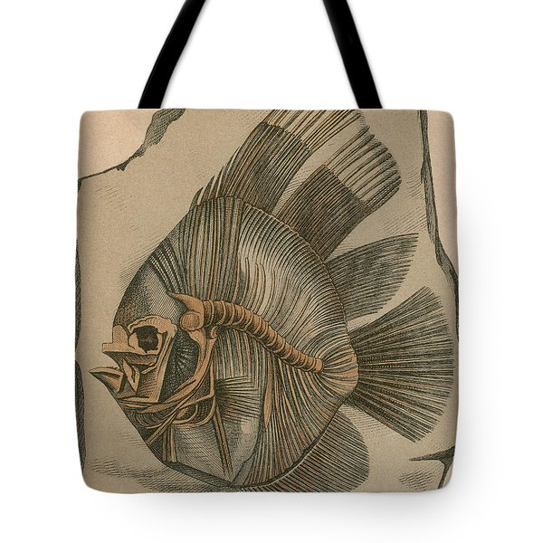 Prehistoric Fish Platax Altissimus Tote Bag by Science Source