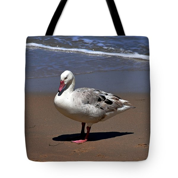 Tote Bag featuring the photograph Pretty Goose Posing On Monterey Beach by Susan Wiedmann