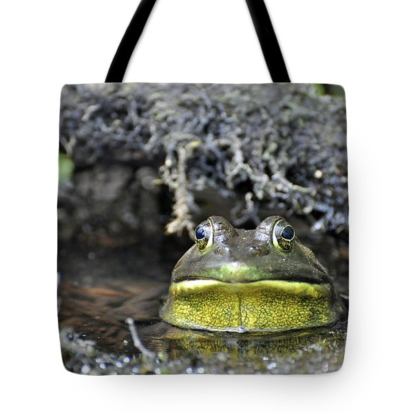 Bullfrog Tote Bag by Glenn Gordon