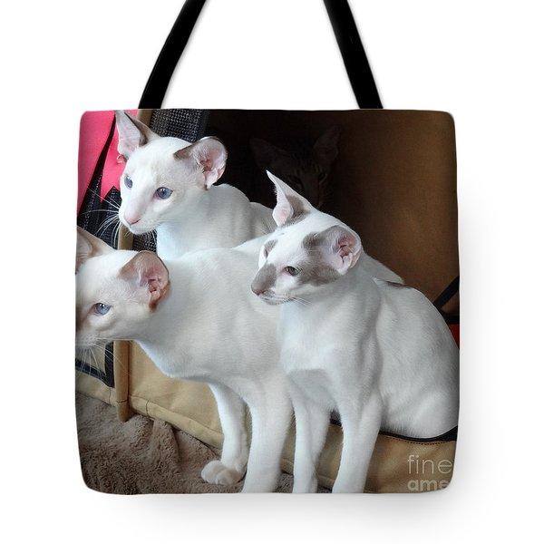 Prize Winning Triplets Tote Bag