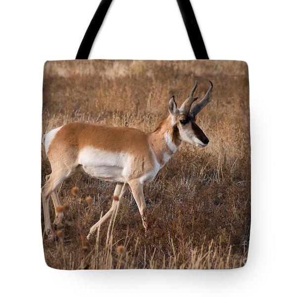 Pronghorn Antelope 2 Tote Bag by Vivian Christopher