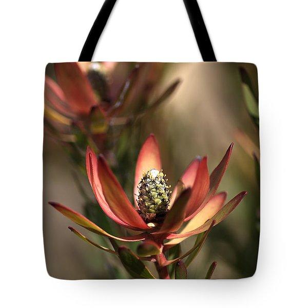 Protea  Tote Bag by Joy Watson