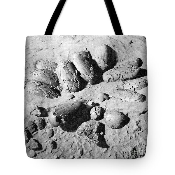 Protoceratops Eggs Cretaceous Dinosaur Tote Bag by Science Source