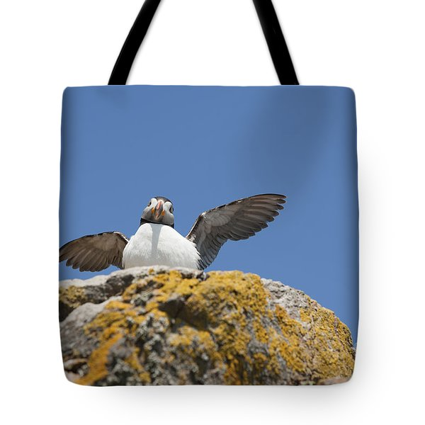 Puffed Up Puffin Tote Bag by Anne Gilbert