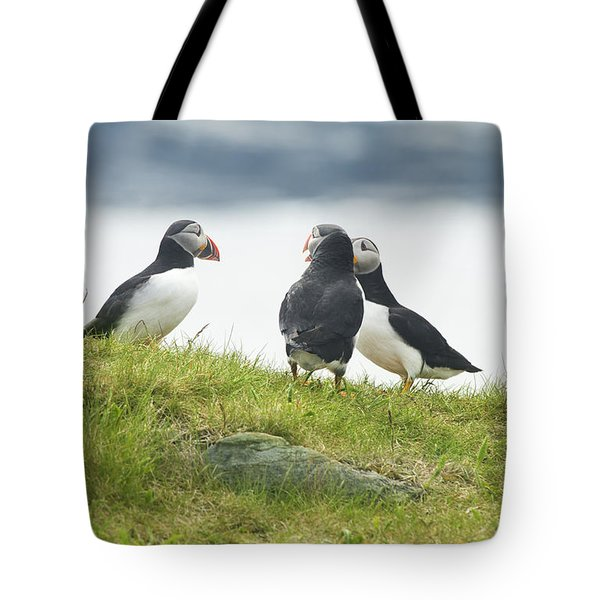 Puffins In A Huddle Tote Bag by Jim  Hatch