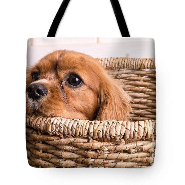 Puppy In A Laundry Basket Tote Bag by Edward Fielding