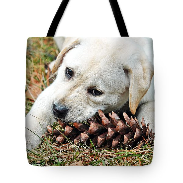 Puppy With Pine Cone Tote Bag by Lisa Phillips