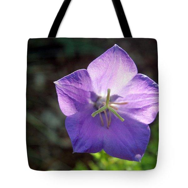 Purple Balloon Flower In Bloom Tote Bag by Kenny Glotfelty