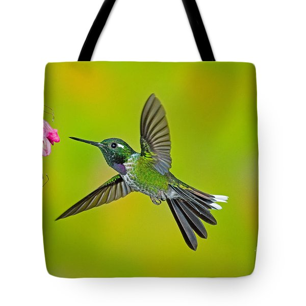 Purple-bibbed Whitetip Hummingbird Tote Bag by Anthony Mercieca