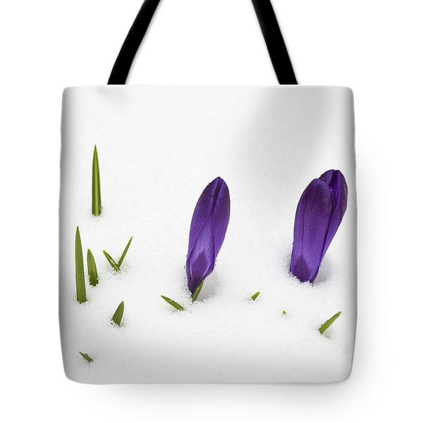 Purple Crocus In The White Snow - Spring Meets Winter Tote Bag by Matthias Hauser