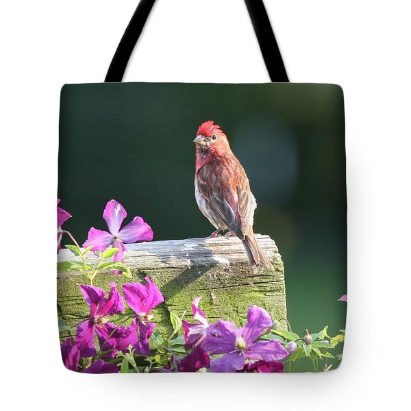 Purple Finch By Clematis Tote Bag