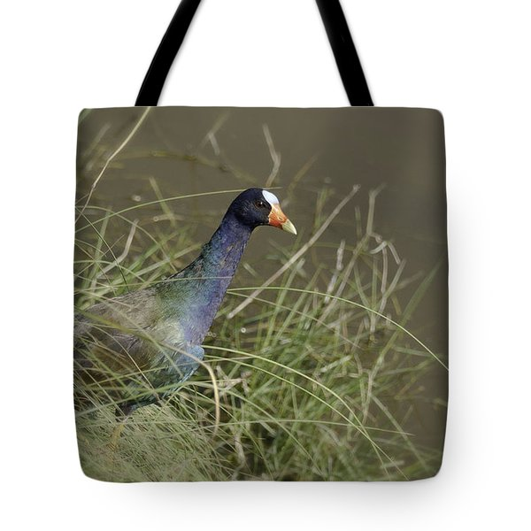 Tote Bag featuring the photograph Purple Gallinule by Betty Depee