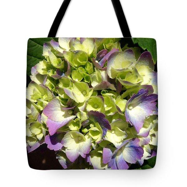 Tote Bag featuring the photograph Purple Hygrangea by Alohi Fujimoto