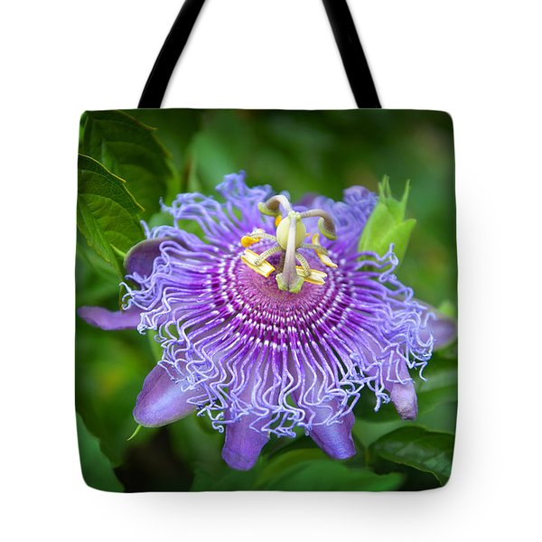 Purple Passion Flower Photograph By Lynn Bauer