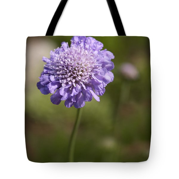 Purple Scabious Columbaria Tote Bag by Tony Cordoza