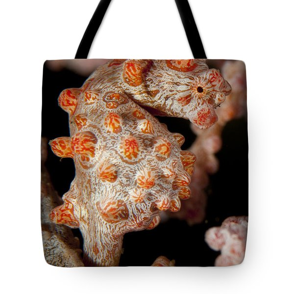 Pygmy Seahorse On Sea Fan, Lembeh Tote Bag by Steve Jones
