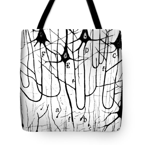 Pyramidal Cells Illustrated By Cajal Tote Bag