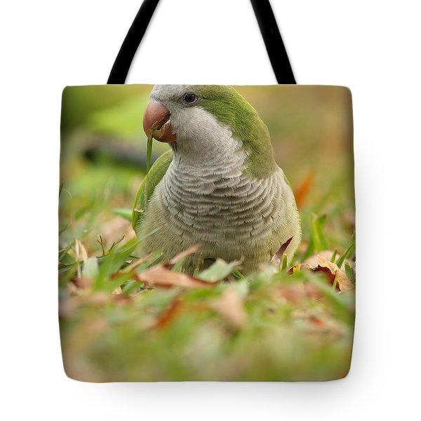 Quaker Parrot #3 Tote Bag