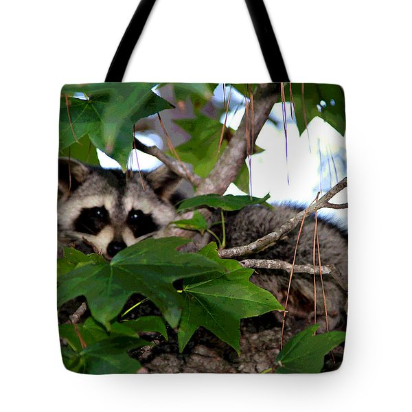 Raccoon Eyes Tote Bag