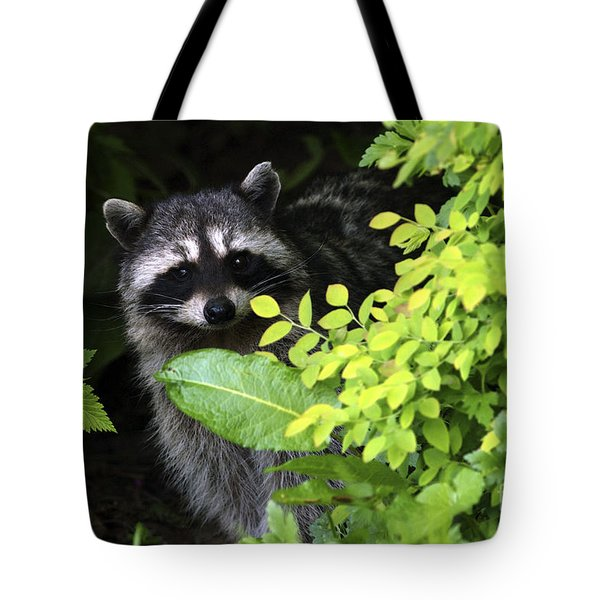 Raccoon Peek-a-boo Tote Bag by Sharon Talson