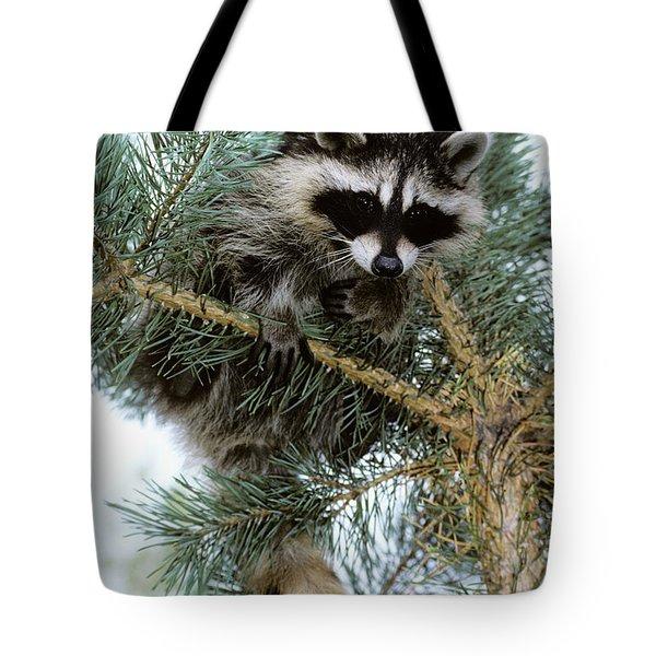 Raccoon Tote Bag