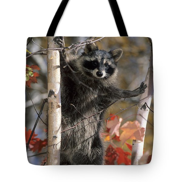 Tote Bag featuring the photograph Racoon In Tree by Chris Scroggins