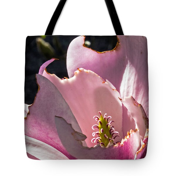 Tote Bag featuring the photograph Ragged Magnolia by Kate Brown