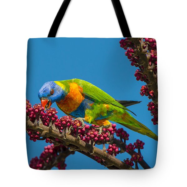 Rainbow Lorikeet Feeding On Queensland Tote Bag