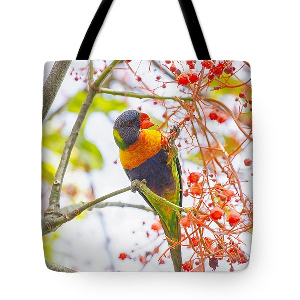 Rainbow Lorikeet In Flame Tree Tote Bag