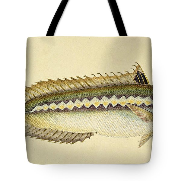 Rainbow Wrasse Tote Bag by E Donovan and FC and J Rivington