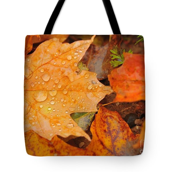 Raindrops On Fallen Maple Leaf Tote Bag